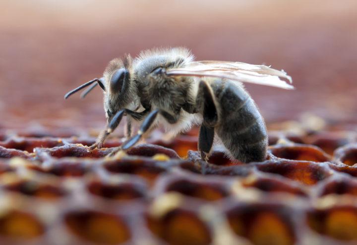 CBD & Bees